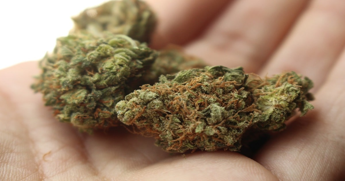 cannabis bud hands